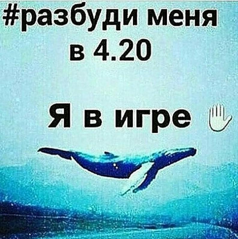 Синий кит группа смерти